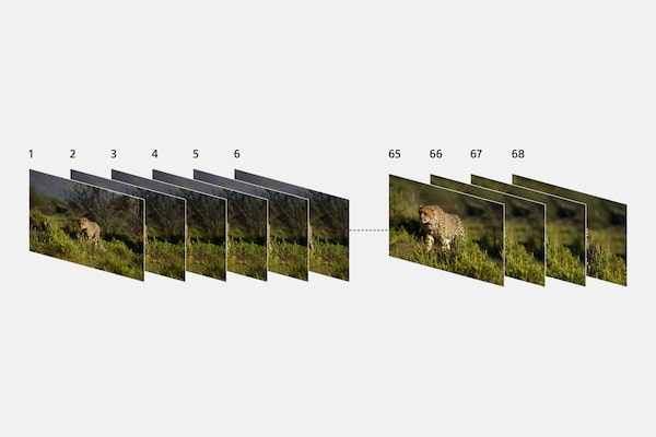 Illustration showing multiple, consecutively shot images of wildlife