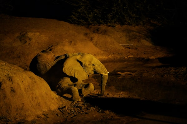 Image of an elephant in a dimly lit setting
